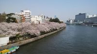 20110411_Osaka_Sakura02.jpg